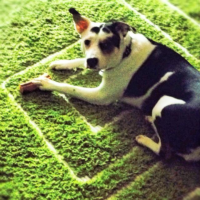 Σε μουντ αυτού του ΣΚ... #προβληματισμός #απορία #ακούγονταιπολλάκαιτρελά #ψήφοςσταπαιχνίδια #moodofthebeauty #justlike #justlove #dogoftheday #puppy #instagood #instagrammer #instalife #instadog #dog #cute #dogs_of_instagram #petstagram #photooftheday #ilovemydog #dogstagram #adorable #doglover #Maya #dogdiaries